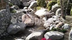 Rock,River,Rainforest,Pond,Plant,Nature,Moss,Landscape,Land,Flower,Creek