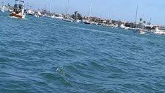 Water, Transportation, Watercraft, Vessel, Vehicle, Waterfront, Boat, Marina, Port, Dock, Pier, Harbor, Yacht, Nature, Ocean