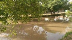 Nature, Water, Outdoors, Land, Vegetation, Plant, Flood, Tree, Pond, Rainforest, Forest, Woodland, Wilderness, Shoreline, River