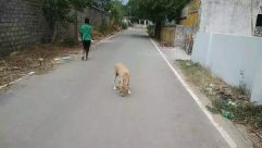 Person, Human, Path, Urban, Building, Town, City, Street, Road, Animal, Pet, Mammal, Dog, Canine, Tarmac