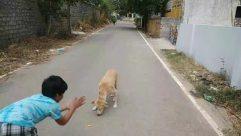 Person, Human, Animal, Canine, Dog, Mammal, Pet, Street, Building, City, Urban, Town, Road, Path, Asphalt
