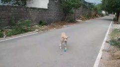 Path, Animal, Canine, Dog, Mammal, Pet, Street, City, Building, Urban, Town, Road, Walkway, Sidewalk, Pavement