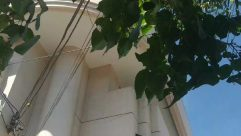 Banister, Handrail, Plant, Leaf, Tree, Building, Architecture, Vine, Outdoors, Staircase, Window, Blossom, Flower, Office Building, Ivy