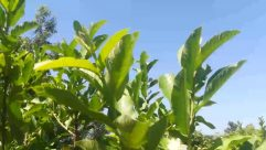 Leaf, Plant, Vegetation, Green, Nature, Outdoors, Land, Potted Plant, Vase, Jar, Pottery, Rainforest, Tree, Bush, Herbs