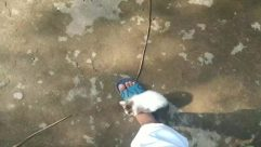 Outdoors, Apparel, Clothing, Person, Sport, Sports, Climbing, Footwear, Nature, Water, Pet, Mammal, Animal, Cat, Bird