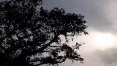 Silhouette, Tree, Plant, Nature, Outdoors, Tree Trunk, Sunlight, Oak, Bird, Animal, Sky, Vegetation, Dawn, Dusk, Sunset