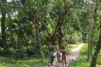Vegetation, Plant, Tree, Land, Jungle, Woodland, Forest, Grove, Path, Trail, Rainforest, Garden, Vehicle, Bike, Bicycle
