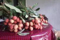 Plant, Vegetation, Bush, Food, Fruit, Meal, Tablecloth, Grass, Leaf, Vase, Jar, Potted Plant, Pottery, Produce, Planter