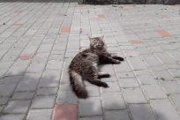 Walkway, Path, Cat, Pet, Flagstone, Brick, Sidewalk, Pavement, Floor, Kitten, Slate, Manx, Canine, Dog, Concrete