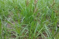 Grass, Plant, Vegetation, Jar, Potted Plant, Pottery, Vase, Bush, Lawn, Planter, Herbs, Tree, Forest, Woodland, Land