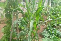 Vegetation, Plant, Land, Rainforest, Tree, Jungle, Woodland, Forest, Art, Painting, Bush, Grass, Grove, Moss, Water