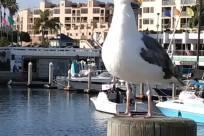 Bird, Water, Waterfront, Harbor, Port, Pier, Dock, Seagull, Marina, Beak, Urban, Vehicle, Building, Town, City