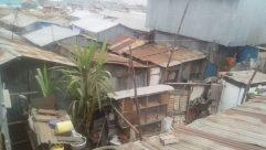 Urban, Building, Slum, Neighborhood, Plant, Staircase, City, Town, High Rise