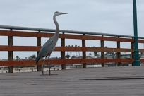 Bird, Waterfowl, Crane Bird, Ardeidae, Heron, Egret, Stork, Water, Dock, Pier, Port, Waterfront, Railing, Boardwalk, Bridge