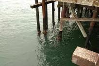 Water, Waterfront, Dock, Pier, Port, Wood, Building, Bridge, Housing, River