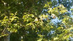Plant, Leaf, Tree, Food, Fruit, Oak, Vegetation, Blueberry, Bush, Sycamore, Produce, Flower, Blossom, Grain, Vegetable