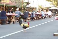 Bird, Chicken, Fowl, Poultry, Cock Bird, Rooster, People, Crowd, Restaurant, Market, outdoor dining