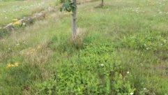 Plant, Vegetation, Bush, Fruit, Food, Vehicle, Truck, Grass, Tree, Apple, Land, Field, Yard, Forest, Woodland