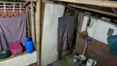 Wood, Plywood, Room, Building, Housing, Workshop, Basement, Vehicle, Plumbing, Invertebrate, Insect, Bee, Furniture, Brick, Mold