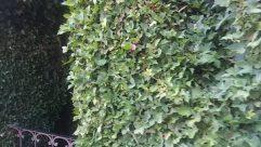 Plant, Vegetation, Rock, Vine, Land, Bush, Tree, Rainforest, Green, Jungle, Ivy, Water, Cave, Forest, Woodland