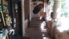 Flooring, Soil, Floor, Gate, Wood, Plant, Fossil, Banister, Handrail, Staircase, Bird, Railing, Root, Art, Corridor