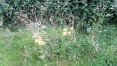 Plant, Grass, Blossom, Flower, Asteraceae, Wilderness, Vegetation, Jar, Vase, Pottery, Potted Plant, Aster, Apiaceae, Bush, Petal