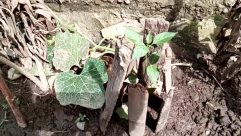Soil, Plant, Ground, Brick, Tool, Hole, Leaf, Archaeology, Ivy, Blossom, Flower, Bird, Pottery, Jar, Hoe