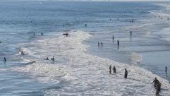Water, Ocean, Sea, Shoreline, Sea Waves, Bird, Coast, Beach, Sport, Sports, Swimming, Landscape, Tsunami, Waterfront, Surfing