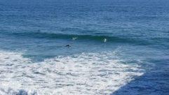Water, Ocean, Sea, Sea Waves, Shoreline, Sport, Sports, Surfing, Coast, Beach, Swimming, Bird, Skin, Surfboard, Landscape