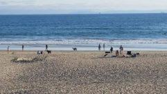 Ocean, Water, Sea, Shoreline, Sand, Beach, Coast, Bay, Bird, Soil, Chair, Furniture, Landscape, Skin, Standing
