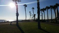 Grass, Plant, Arecaceae, Tree, Palm Tree, Light, Flare, Sunlight, Sky, Sun, Lawn, Park, Building, City, Metropolis