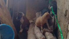Wildlife, Face, Art, Monkey, Canine, Painting, Dog, Pet, Photo, Photography, Portrait, Bear, Wood, Wolf, Zoo