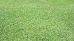 Plant, Grass, Building, Shelter, Rural, Countryside, Field, Sport, Sports, Team, Team Sport, Lawn, Football, Tree, Vehicle