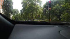 Light, Traffic Light, Plant, Tree, Mirror, Automobile, Vehicle, Car, Windshield, Vegetation, Car Mirror, Land, Woodland, Forest, Grove