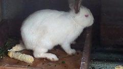 Rodent, Hare, Wildlife, Bear, Cat, Pet, Bunny, Rabbit, Rat, Giant Panda, Angora, Wood