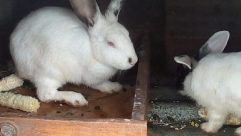 Rodent, Hare, Wildlife, Bear, Giant Panda, Cat, Pet, Bunny, Rabbit, Pig, Bird, Rat