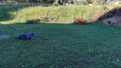 Grass, Plant, Yard, Lawn, Canine, Dog, Pet, Vegetation, Park, Backyard, Bush, Tree, Puppy, Field, Land