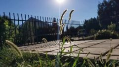 Plant, Grass, Vegetation, Invertebrate, Sunlight, Fence, Sky, Sun, Insect, Field, Light, Flare, Lawn, Train, Vehicle