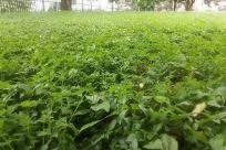 Plant, Vegetation, Field, Grass, Yard, Countryside, Tree, Land, Forest, Woodland, Rural, Farm, Grove, Leaf, Green