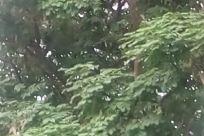 Plant, Tree, Vegetation, Leaf, Tree Trunk, Conifer, Potted Plant, Jar, Vase, Pottery, Land, Building, Housing, Abies, Fir