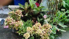 Plant, Blossom, Flower, Leaf, Yard, Garden, Jar, Potted Plant, Pottery, Vase, Araceae, Vegetation, Pet, Cat, Geranium