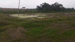 Land, Field, Grassland, Grass, Plant, Countryside, Ground, Water, Savanna, Rural, Farm, Landscape, Pasture, Vegetation, Meadow