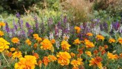Blossom, Flower, Geranium, Plant, Lupin, Vase, Pottery, Potted Plant, Jar, Flower Arrangement, Petal, Aster, Daisies, Daisy, Planter, marigold
