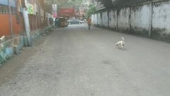 Town, Road, Building, City, Street, Shoe, Footwear, Alleyway, Alley, Pet, Canine, Dog, Vehicle, Car, Automobile