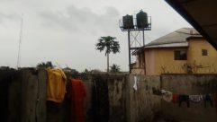 Building, Plant, Tree, Slum, Arecaceae, Palm Tree, Bird, Billboard, City, Town, Water Tower, Prison