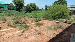 Yard, Plant, Vegetation, Soil, Ground, Building, Shelter, Countryside, Rural, Land, Field, Bush, Woodland, Tree, Forest