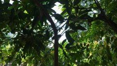 Vegetation, Plant, Tree, Jungle, Land, Rainforest, Woodland, Forest, Leaf, Arbour, Garden, Grove, Tree Trunk, Bird, Porch