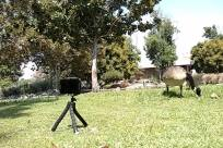 Tripod, Bird, Field, Zoo, Goose, Grassland, Yard, Plant, Tree, Grass, Vegetation, Countryside, Farm, Rural, Pasture