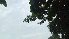 Plant, Tree, Vegetation, Tree Trunk, Flare, Light, Oak, Land, Woodland, Forest, Sunlight, Bird, Sky, Silhouette, Fruit