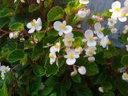 Plant, Blossom, Flower, Geranium, Petal, Pottery, Jar, Potted Plant, Vase, Vegetation, Pollen, Planter, Anemone, Herbs, Leaf